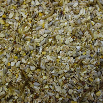 Superior Wild Bird Food With Insect Larvae